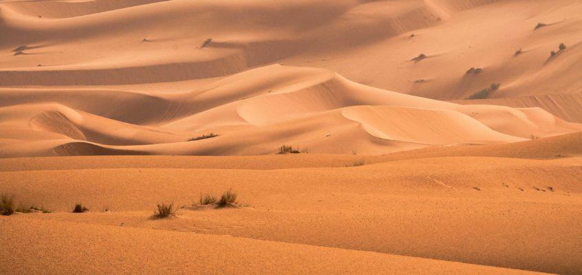 Hello, desert.